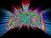 Saccharide transport protein