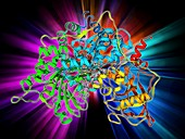 Metabolic enzyme molecule