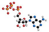 Adenosine triphosphate molecule