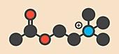 Acetylchloline neurotransmitter molecule