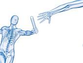Skeletal system of a runner,Illustration