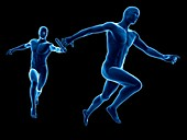 Anatomy of a runner,Illustration