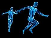 Skeletal system of runners,Illustration