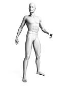 Man standing,illustration