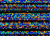 Human DNA sequence