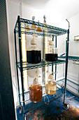 Diatom research