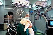 Laboratory rabbit in surgery research