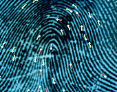 Computer graphic of features marked on fingerprint