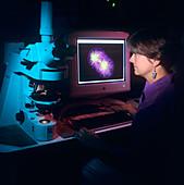 Dr Julie Ahringer,American geneticist