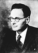 Hans Krebs,German-British biochemist