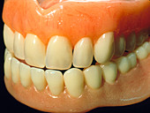 Close-up of a set of false teeth or dentures