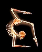 Elbow stand,X-ray artwork