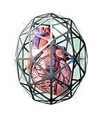 Protected heart,conceptual artwork