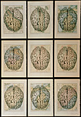 Artwork of 9 brain images on maps of the world