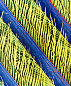 False-colour SEM of a magpie's feather