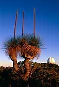 View of the Anglo-Australian Telescope,Australia