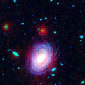 Distant galaxy HUDF-JD2,HST-SST image
