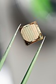 Silicon nanowire device,held by tweezers