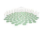 Phyllotactic model in 3D