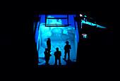 Virtual reality display,Cluny Abbey