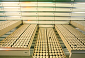 Vials in opened drawers at a drug molecule library