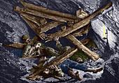Mining disaster,19th century