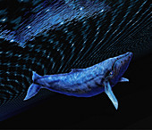 Computer artwork of a humpback whale