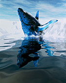Computer illustration of a humpback whale