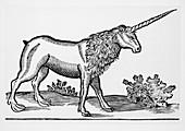 Engraving of a unicorn,a mythological beast