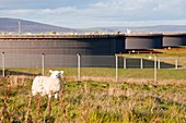 Flotta oil terminal,Orkney,UK