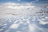 Snowy hummocks