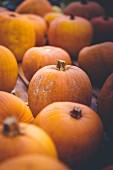 Orangefarbene Kürbisse