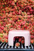 Frische Rambutan auf Markt (Thailand, Asien)