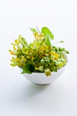 Flowering pakalana vine in a bowl