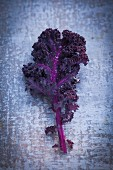 A red kale leaf