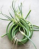 Garlic scrapes tied in a circle