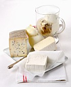 Various types of buffalo milk cheese