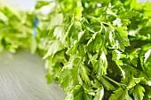 A bunch of flat leaf parsley