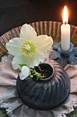 Original Christmas arrangement of white hellebore in cake tin and lit candle