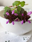 Purple wild flowers on a ceramic bowl (close-up)