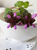 Purple wild flowers on a ceramic bowl (close-up)
