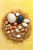 Various eggs in straw