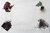 Various types of dried seaweed, algae powder and algae tablets