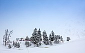 Trees in winter at a ski resort