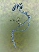 Gene editing,conceptual illustration