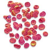 Blood cells,SEM