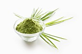 Wheatgrass powder in a glass bowl on a white surface