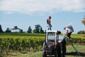 Grape harvest at Saint-Emilion with the Château Grand Pontet iin the background, Bordeaux, France