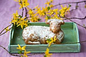 captivate Easter lamb on a tray decorated with sprigs of forsythia