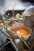 Aufgeschlagenes Ei mit Eierschale in Eierkarton mit Stroh